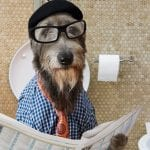 dog reading newspaper on the toilet, funny