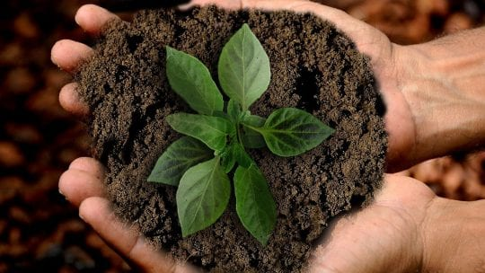 hands hold plant in soil